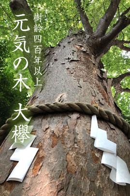 元気の木 大欅